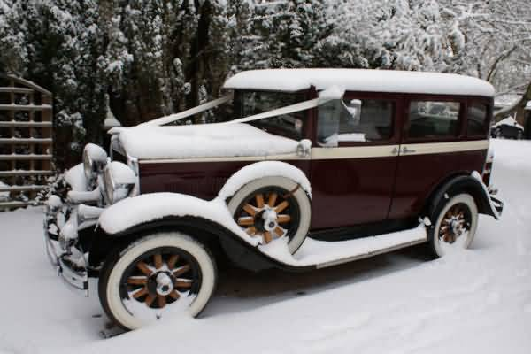 In the same 2010 snow storm. Esther sure contrasts with the white snow&nbsp;&nbsp;&nbsp; - &nbsp;&nbsp;&nbsp;<small>&copy;&nbsp;&nbsp; David Jones&nbsp;</small>